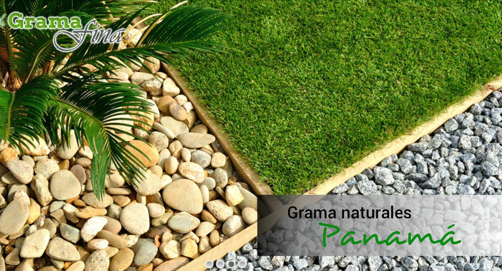Grama natural, compras en Panamá