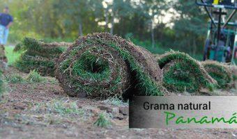Rollo grama natural, compras en Panamá