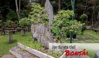 Jardines del Bonsái, Panamá